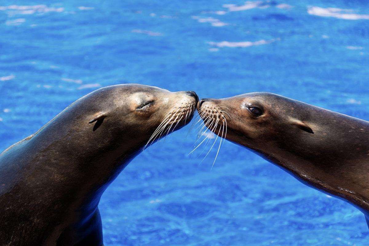 Puerto Vallarta Dolphin Royal Swim-1