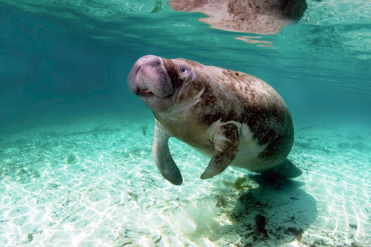 Dolphin Swim Adventure - Puerto Aventuras-2