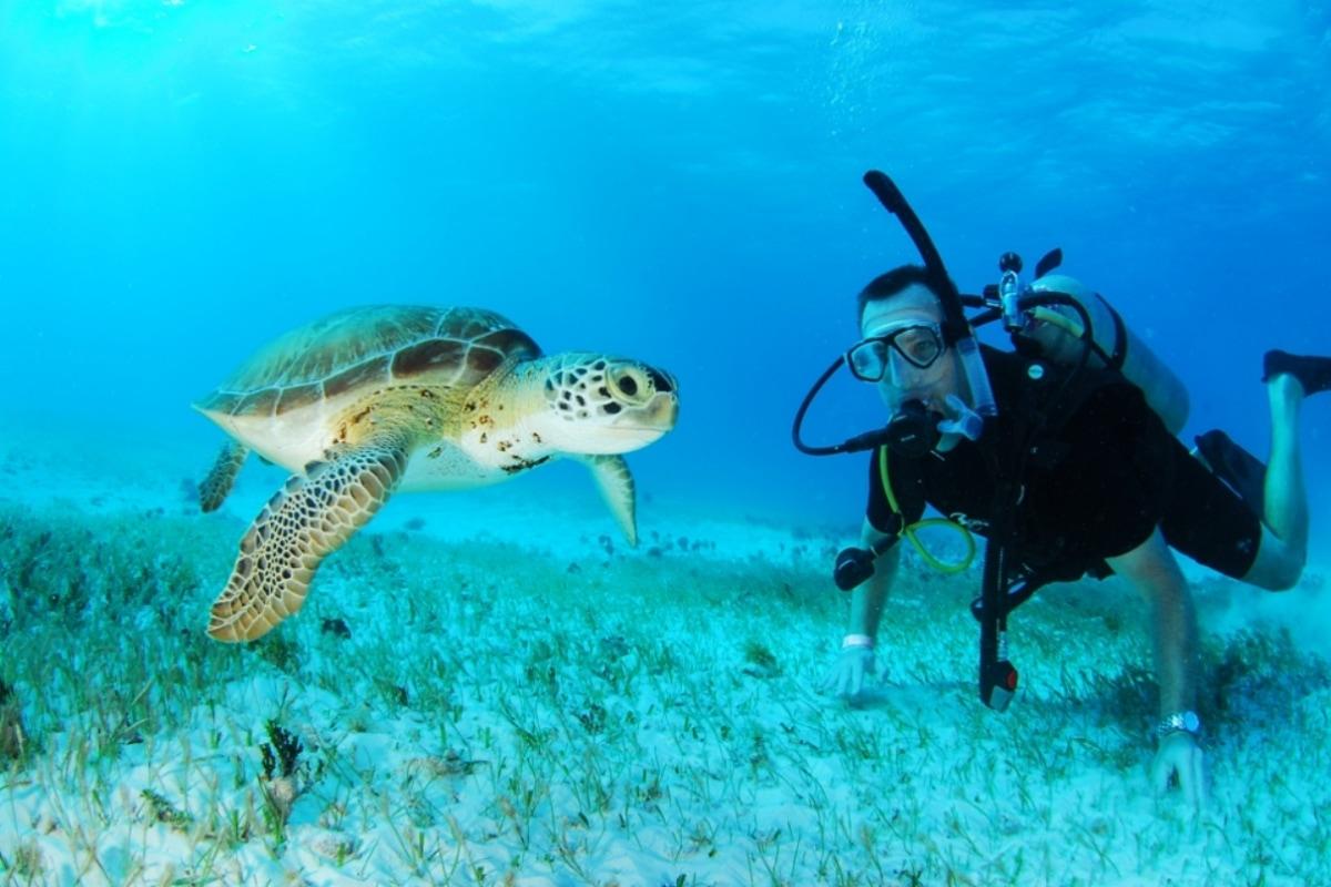 Cancun Scuba Diving - Two tank-0