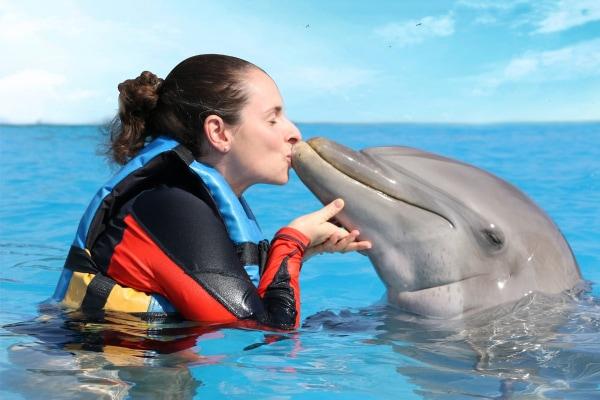 Dolphin Swim Adventure - Puerto Aventuras